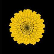 Sunflower Piirros