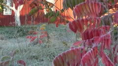 Tree leaves and grass frozen with frost rime and garden house in autumn. 4K Stock Footage