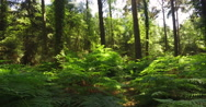 Panning through a forest Stock Footage