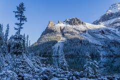 Fresh snow on Wiwaxy Peaks, Yoho National Park, British Columbia, Canada Stock Photos