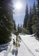 A couple enjoys a day of dog sledding at Sun Peaks Resort, near Kamloops, Stock Photos