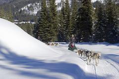 A couple enjoys a day of dog sledding at Sun Peaks Resort, near Kamloops, Kuvituskuvat