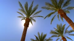 Sunny blue sky over palm trees with sun beams 5 Stock Footage