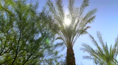 Sunny blue sky over palm trees with sun beams Stock Footage