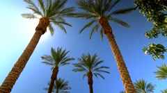 Sunny blue sky over palm trees with sun beams 7 Stock Footage