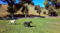 Horses gallop across farm on sunny day 3 Stock Footage