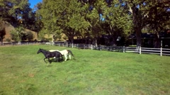 Horses gallop across farm on sunny day 5 Stock Footage