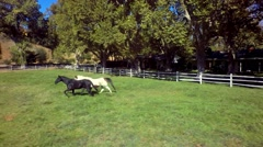 Horses gallop across farm on sunny day 6 Stock Footage