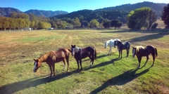 Herd of horses stand on farm by mountains in the sun 2 Stock Footage