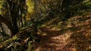 Forest Walk in Autumn, gliding majestic slomo, steady Stock Footage