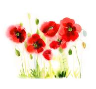 Watercolor poppies on a white background Stock Illustration