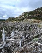 Clearcut logging near entrance to Carmanah Walbran Provincial Park, Vancouver Stock Photos
