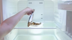 The man opens the empty refrigerator and take one of several fish, bachelor life Stock Footage