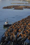Tugboat and log boom, North Arm Fraser River, Vancouver, British Columbia, Stock Photos