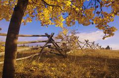 Russell fence & aspen tree in fall colours, Chilcotin region, British Columbia, Stock Photos