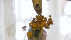 A person pours slowly cashew nuts with paper bag on a mirror table, close-up Stock Footage