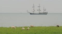 Traditional sailing ship on IJselmeer lake with sheep,IJselmeer,Netherlands Stock Footage