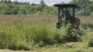 Combine cutting reed in swampy land,Noord Holland,Netherlands Stock Footage