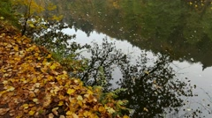 Forest still in Autumn at a river, falling leave causes waves in the water. Stock Footage