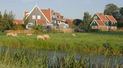Traditional houses in village with sheep grazing,Marken,Netherlands Stock Footage