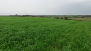 Wheat crops green wheat agriculture Stock Footage