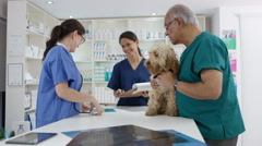 4K Veterinarians looking at x-ray of cute dog in clinic Stock Footage