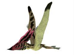 Thalassodromeus Pterosaur Side View Stock Illustration