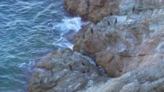 Group of great cormorants (Phalacrocorax carbo) on the cliff Stock Footage
