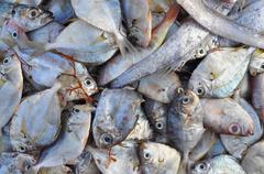 Forage fish in asia Stock Photos
