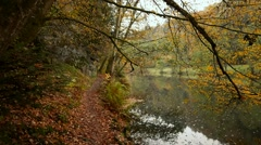 Forest Walk in Autumn, Steady, Part1 Stock Footage