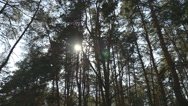 Tracking shot in a thick deciduous forest. Sun glimmering through tree Stock Footage