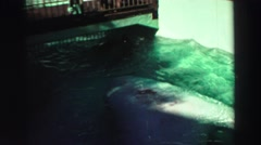 1969: let's play in the water YOSEMITE, CALIFORNIA Stock Footage