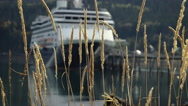 Cruise Ship In View Through Seaside Foliage Stock Footage
