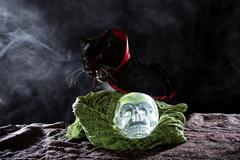 Black Cat in a Costume on Halloween Stock Photos