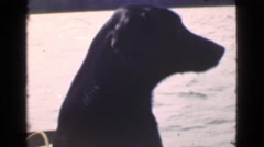1946: ocean riding dog, taking in a boating and summer fun! MIAMI. FLORIDA Stock Footage