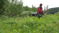 Woman in Red Jacket Wildcrafting Medicinal Plants Alaska Stock Footage