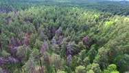 Flight over forest Stock Footage
