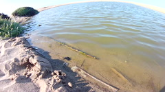Ripples traveling across salt water pond. Stock Footage