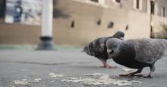 Birds eating crumbs on a New York City sidewalk - closeup Stock Footage