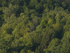 Detail of forest on a hillside. Haliburton, Ontario, Canada. Stock Footage