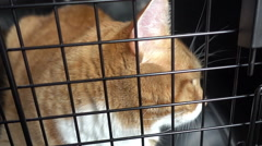 Cat cage carrier animal shelter transport stray Stock Footage