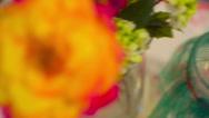 Catepillar monarch captivity Stock Footage