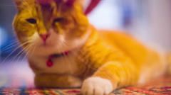 Playful cat play fun Stock Footage