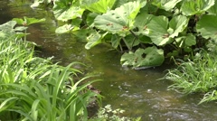 Thickets of herbaceous plants on the banks of the stream. Stock Footage