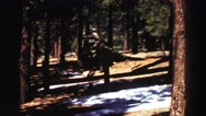 1969: unknown animal in possible evergreen forest YOSEMITE, CALIFORNIA Stock Footage