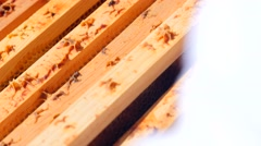 A closeup shot of bees in a bee hive Stock Footage
