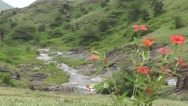 Red Flowers on Mountain River Flows in Background Nature Footage Stock Footage