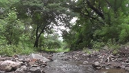 River Flows in Forest Footage Stock Footage