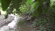 River Flows at The Side of Trees Nature Footage Stock Footage
