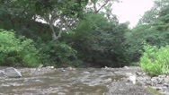 River Water Flows Very Close to The Ground in Nature Forest Stock Footage
